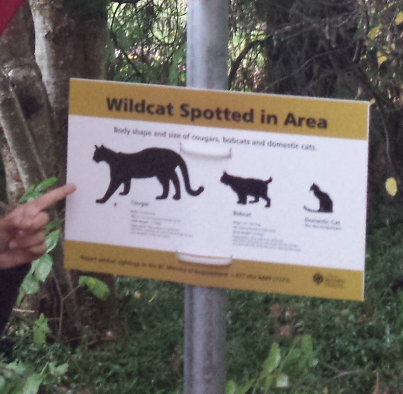 Wildcat Warning Sign Small